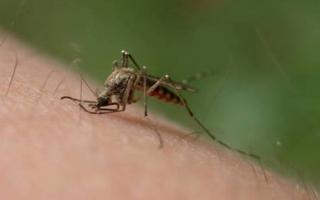 Qué es el paludismo